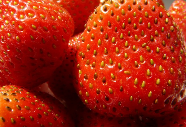 strawberries-58195_1920